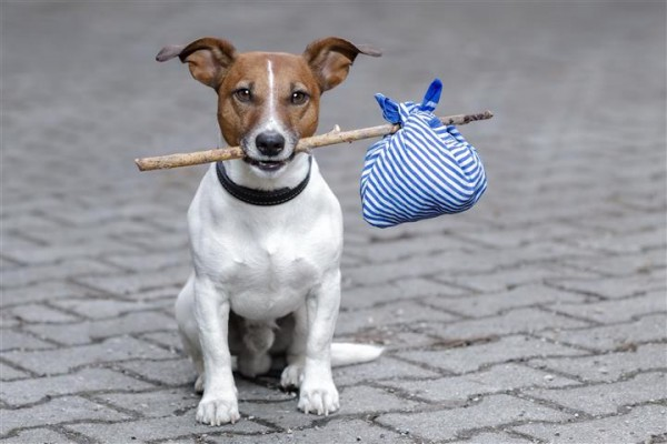 No need to worry about moving to a new place without your pet